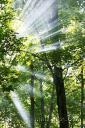 forestlight-320x480.jpg