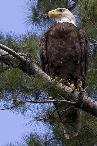 eagle-320x480.jpg